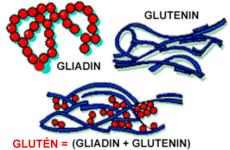 Mi az a glutén?