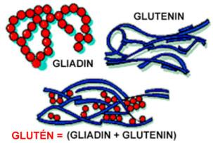 A glutén gliadin és glutenin nevű fehérjékből tevődik össze. A sikér azonos a gluténnel.