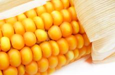 Kukorica allergia