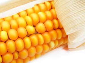 Kukorica allergia különösen kellemetlen cöliákia esetén.